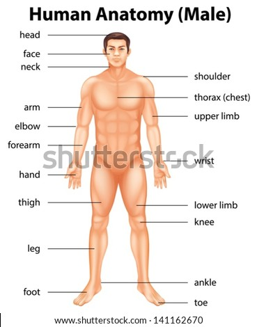 Human Body Parts Images