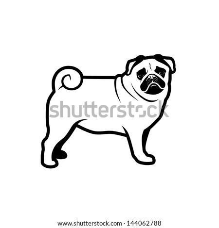 pug dog isolated   vector