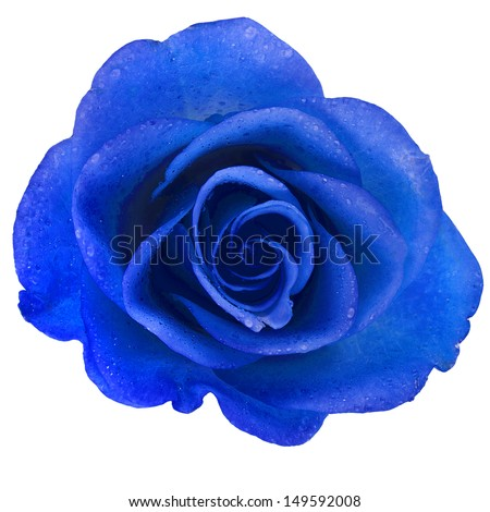 Blue Rose Free Stock Photos Download 7 101 Free Stock Photos For