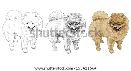 drawing of pomeranian after