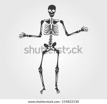 skeleton and bones