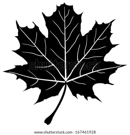 maple leaf free vector download (3,507 free vector) for commercial