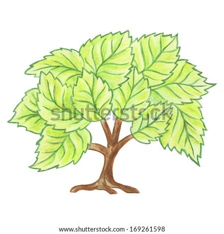 Summer Tree Cartoon Tree Summer Tree in