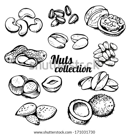 nuts collection isolated on a