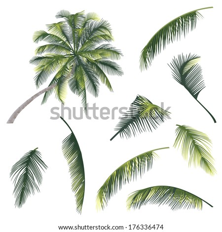 vector illustration of a tree