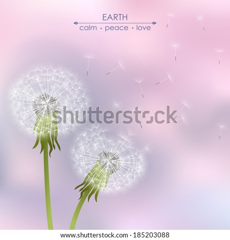 spring dandelion flowers  on a