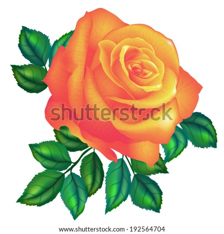 orange rose vector on white