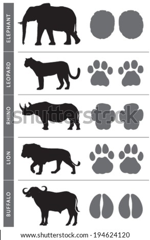 africa's big five animal tracks