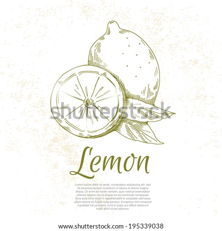 lemon vector hand drawing