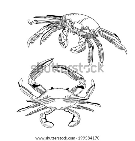 vector illustration with crabs