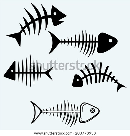 fish skeleton image isolated