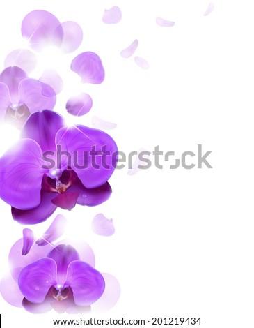Purple orchids vector Free Vector / 4Vector