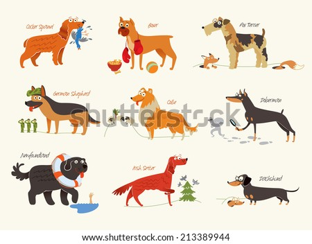 dog breeds cocker spaniel