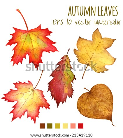 autumn leaves a watercolor on a