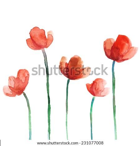 set of watercolor poppy flowers