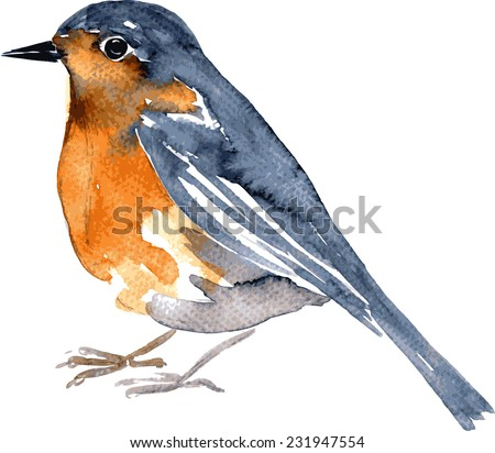 watercolor drawing bird  robin