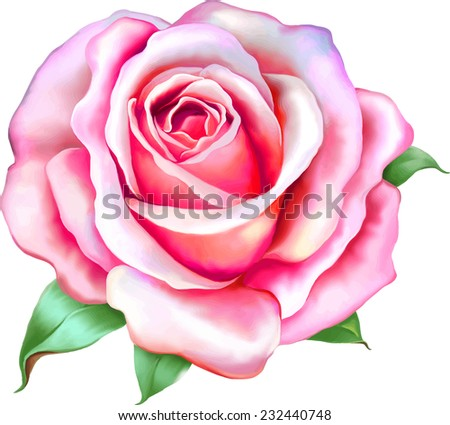 vector pink rose flower