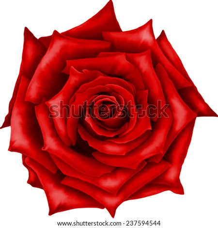 vector red rose flower isolated