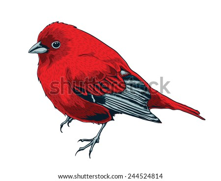 little red bird vector