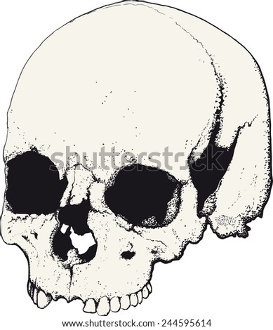 skull drawn as tattoo in