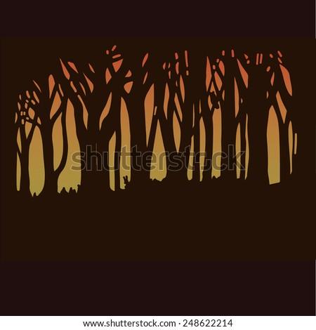 dark forest in sunset light