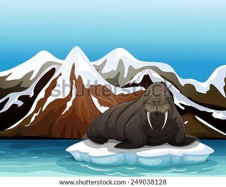a walrus above the iceberg