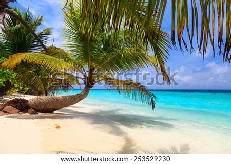 palm tree on the shore of the