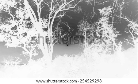 silhouettes of big trees in the