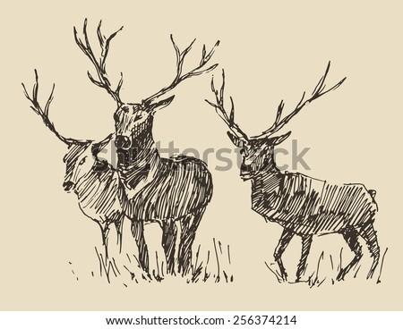 deers engraving style  vintage