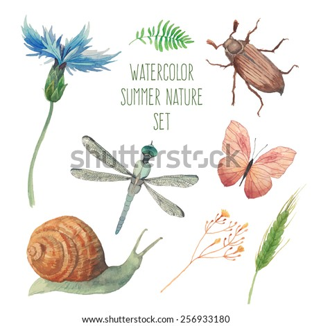 watercolor butterfly  chafer