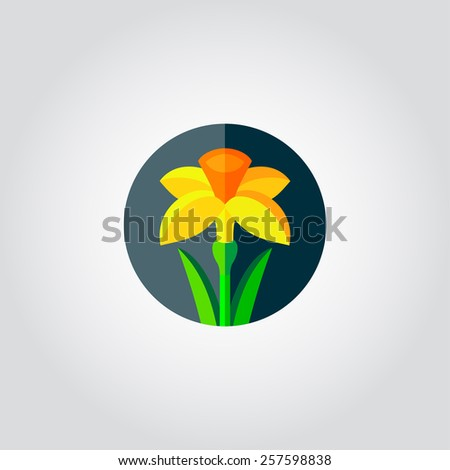 yellow daffodil   narcissus