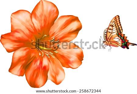 beautiful bright orange red