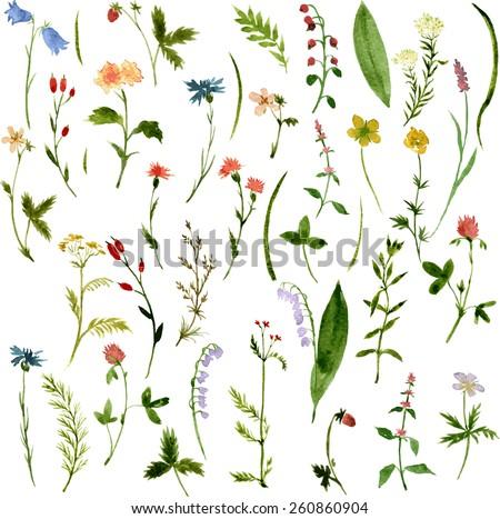 set of watercolor drawing herbs