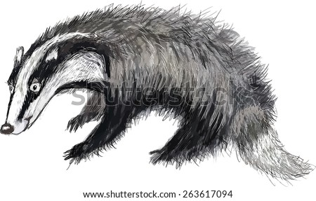 cartoon animal badger