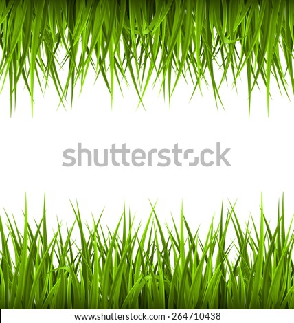 green grass like frame isolated