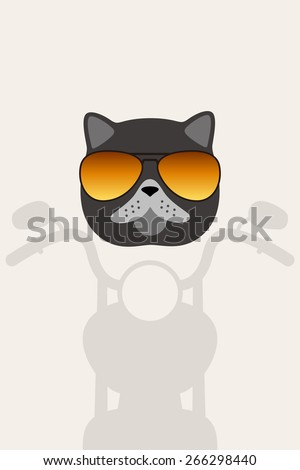 exotic cat wear glasses  ride
