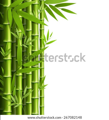 green bamboo grove isolated on