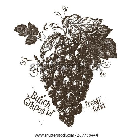 bunch of grapes vector logo