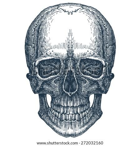skull vector logo design