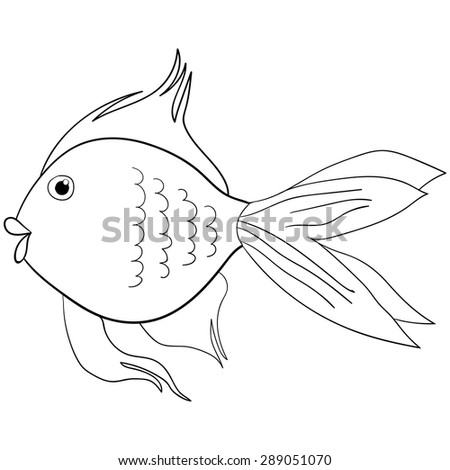fish on the white background