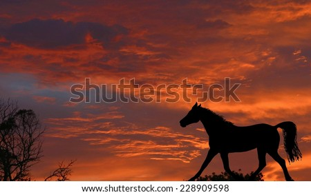 A beautiful sunrise with dramatic red sky background and a black horse silhouette - stock photo