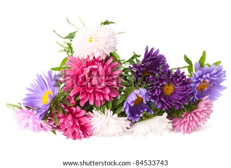 a bouquet of asters on a white background - stock photo