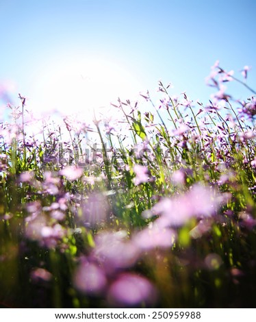 a bunch of pretty pink wild flowers shot with a wide angle lens right into the sun (very shallow DOF) - stock photo