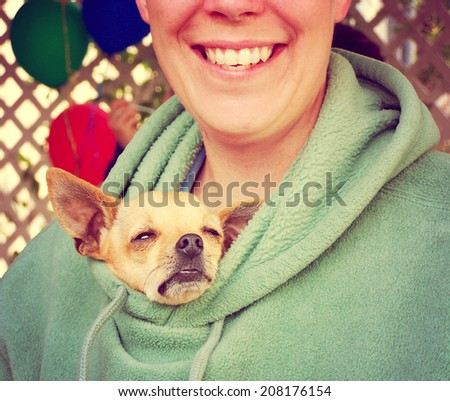 a chihuahua poking his head out of a person's jacket toned with an instagram like filter - stock photo
