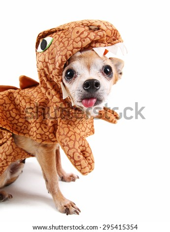 a cute chihuahua in a dinosaur costume sticking his tongue out at the camera isolated on a white background - stock photo