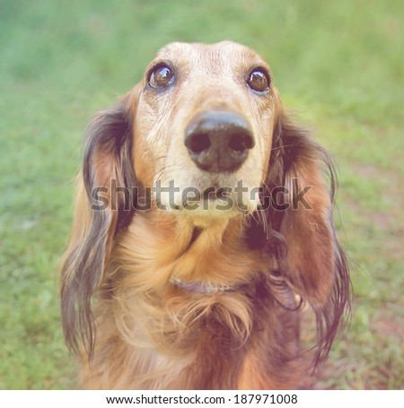 a cute dog at a local public park done with a warm filter - stock photo