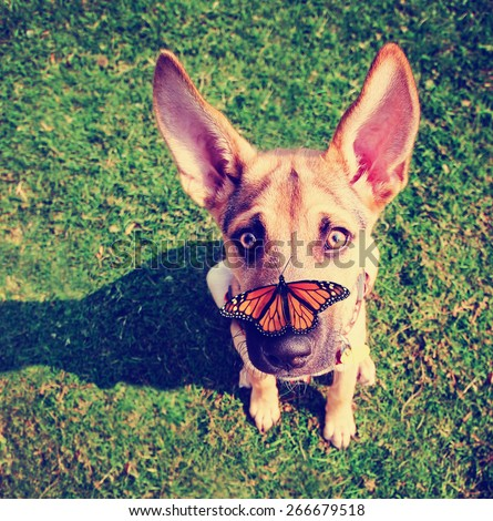 a cute dog in the grass at a park during summer with a butterfly on his or her nose toned with a retro vintage instagram filter effect app or action - stock photo