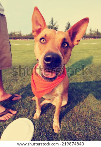 a cute happy dog in the grass at a park during summer toned with a retro vintage instagram filter effect - stock photo