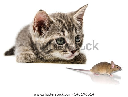 a cute little kitten and a mouse - stock photo