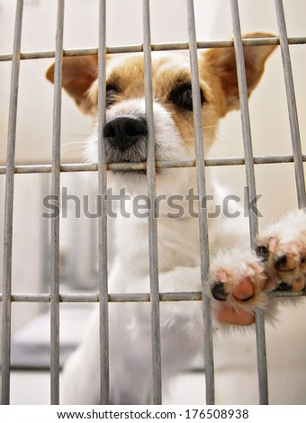 a dog in an animal shelter, waiting for a home (shot at high iso) - stock photo
